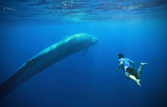Mavi balina oyunu nedir